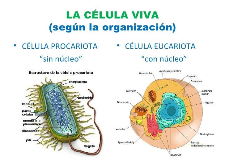 Resultado de imagen de Una célula viva