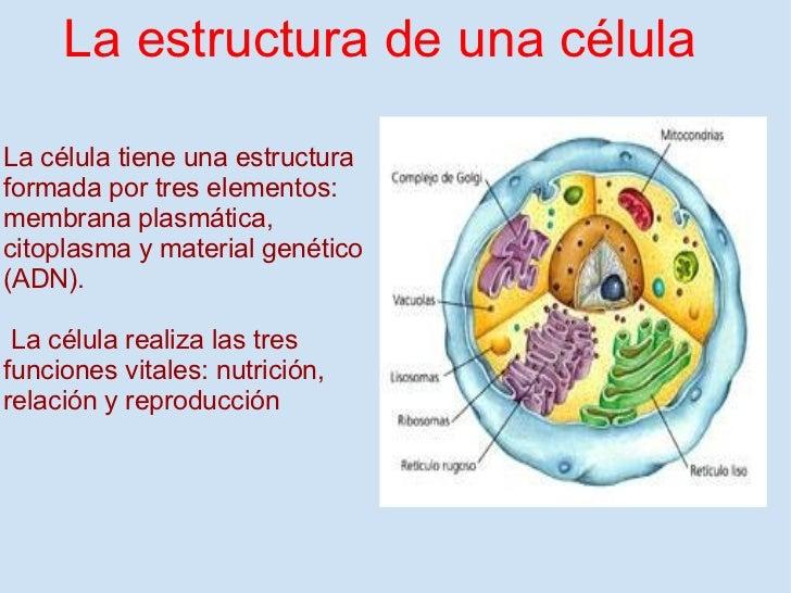 Las funciones vitales for Cual es la estructura del periodico mural