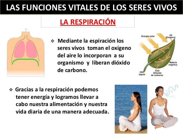 las-funciones-vitales-de-los-seres-vivos-5-638.jpg?cb=1366474995