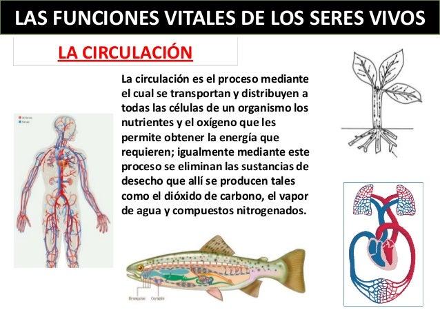 Las funciones vitales de los seres vivos - Alimentos para la circulacion ...