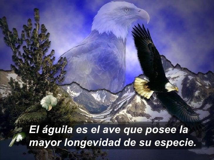 Las águilas Se Renovan