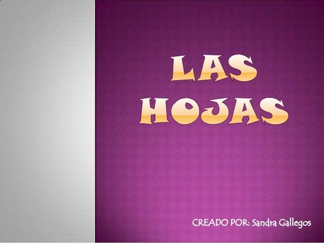 CREADO POR: Sandra Gallegos
