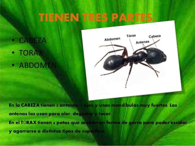 Las hormigas for Hormigas en el jardin