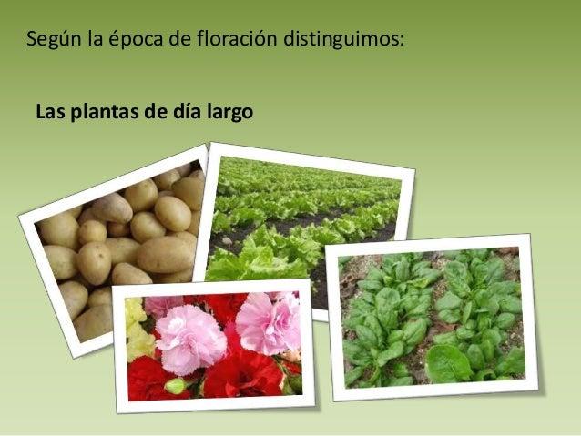 Las hormonas vegetales for Hormonas en las plantas