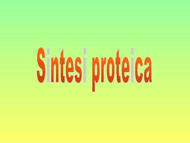 Cos'è la sintesi proteica • La sintesi proteica è il processo che porta alla formazione delle proteine utilizzando le info...