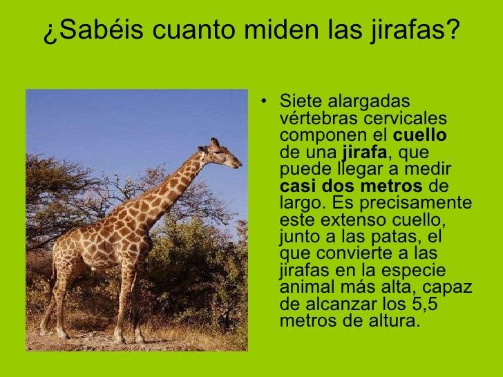 Las jirafas aitana y alba for Cuanto miden los arboles