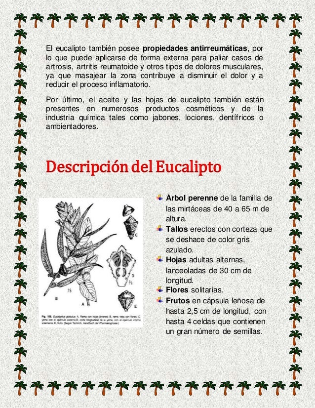 Las maravillas del eucalipto - Informacion sobre el eucalipto ...
