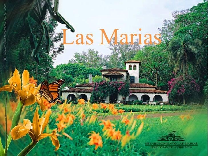 LAS MARIAS Las Marias