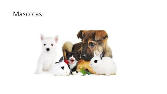 Mascotas: