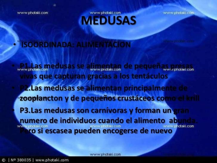 Las medusas - Como se alimentan las medusas ...