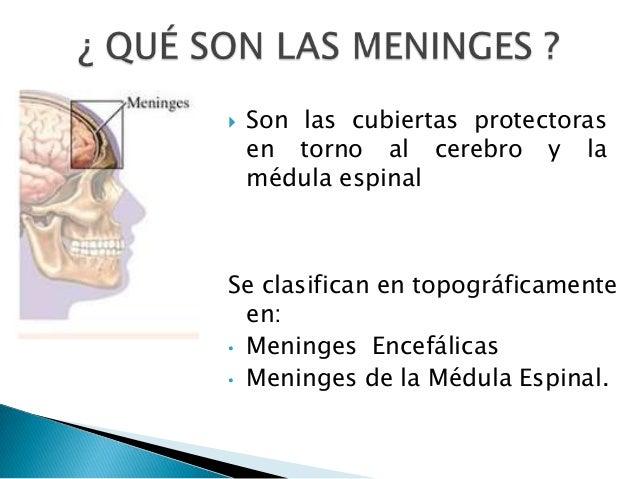   Son las cubiertas protectoras en torno al cerebro y la médula espinal  Se clasifican en topográficamente en: • Meninges...