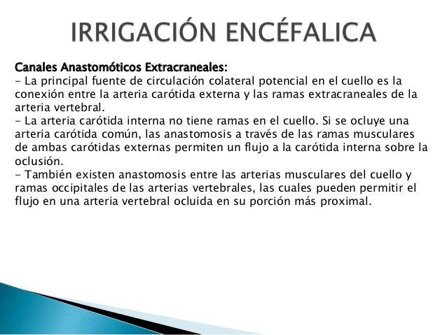 Canales Anastomóticos Extracraneales: - La principal fuente de circulación colateral potencial en el cuello es la conexión...