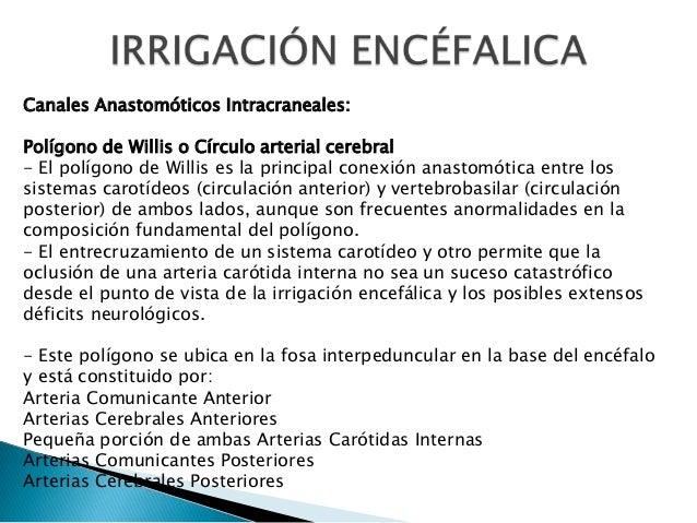 Canales Anastomóticos Intracraneales: Polígono de Willis o Círculo arterial cerebral - El polígono de Willis es la princip...