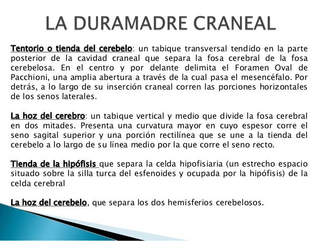 Tentorio o tienda del cerebelo: un tabique transversal tendido en la parte posterior de la cavidad craneal que separa la f...