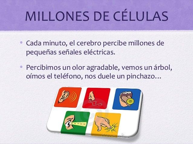 MILLONES DE CÉLULAS• Cada minuto, el cerebro percibe millones depequeñas señales eléctricas.• Percibimos un olor agradable...