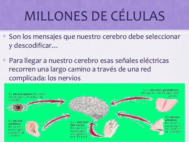 MILLONES DE CÉLULAS• Son los mensajes que nuestro cerebro debe seleccionary descodificar…• Para llegar a nuestro cerebro e...