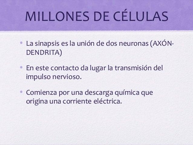MILLONES DE CÉLULAS• La sinapsis es la unión de dos neuronas (AXÓN-DENDRITA)• En este contacto da lugar la transmisión del...