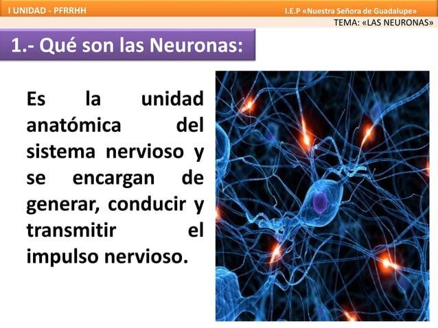 1.- Qué son las Neuronas: Es la unidad anatómica del sistema nervioso y se encargan de generar, conducir y transmitir el i...
