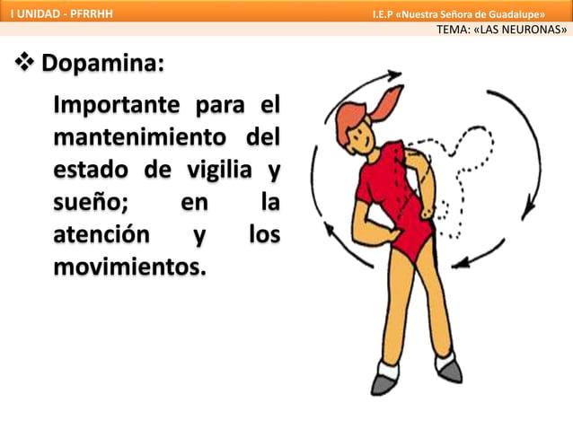  Dopamina: TEMA: «LAS NEURONAS» I UNIDAD - PFRRHH I.E.P «Nuestra Señora de Guadalupe» Importante para el mantenimiento de...
