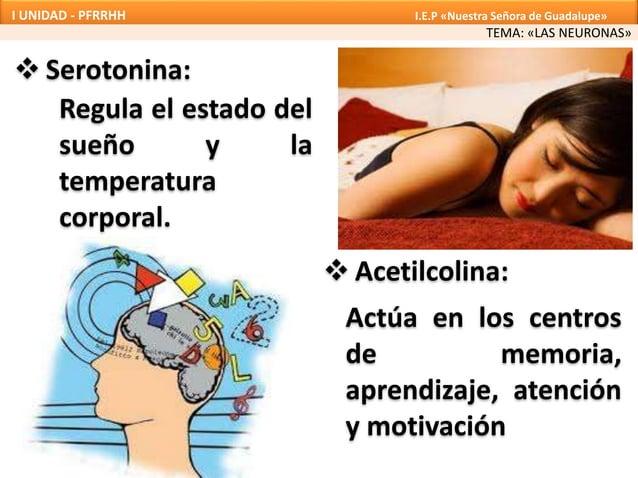  Serotonina: Regula el estado del sueño y la temperatura corporal.  Acetilcolina: Actúa en los centros de memoria, apren...