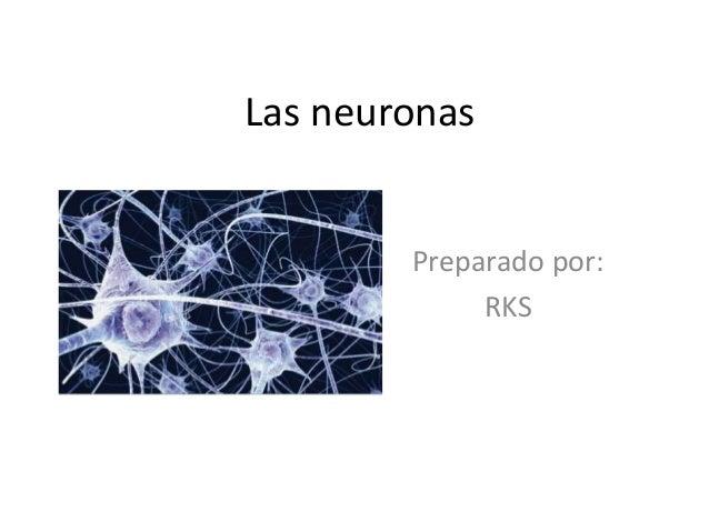 Las neuronas Preparado por: RKS