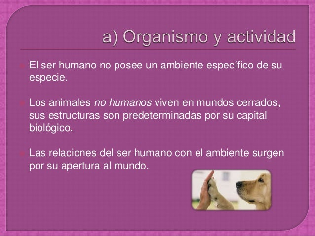  El ser humano no posee un ambiente específico de su especie.  Los animales no humanos viven en mundos cerrados, sus est...
