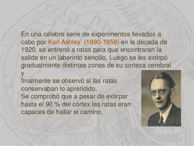 En una célebre serie de experimentos llevados a cabo por Karl Ashley (1890-1958) en la década de 1920, se entrenó a ratas ...