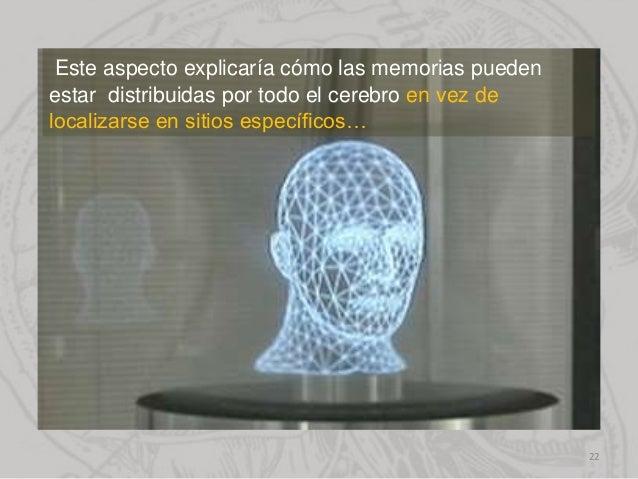 Este aspecto explicaría cómo las memorias pueden estar distribuidas por todo el cerebro en vez de localizarse en sitios es...