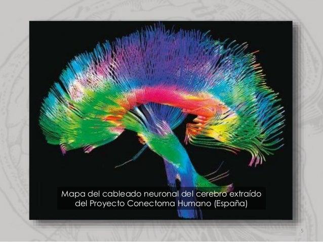 Mapa del cableado neuronal del cerebro extraído del Proyecto Conectoma Humano (España) 5