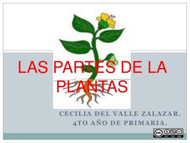 CECILIA DEL VALLE ZALAZAR. 4TO AÑO DE PRIMARIA. LAS PARTES DE LA PLANTAS
