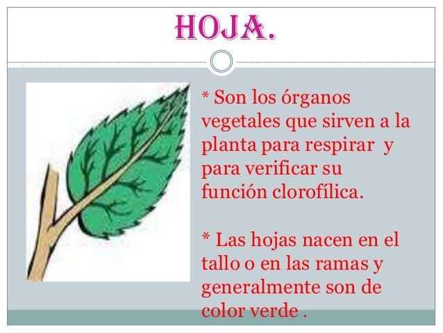 Las partes de la plantas para alumnos de 3 grado de primaria for Que son las plantas ornamentales y para que sirven