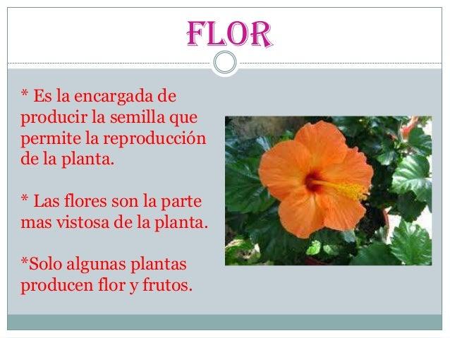 Las partes de la plantas para alumnos de 3 grado de primaria - Cuales son las plantas con flores ...