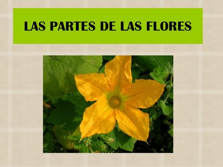 LAS PARTES DE LAS FLORES