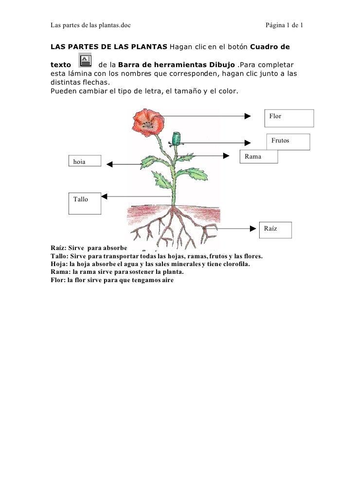 Las partes de las plantas.doc                                                Página 1 de 1   LAS PARTES DE LAS PLANTAS Hag...