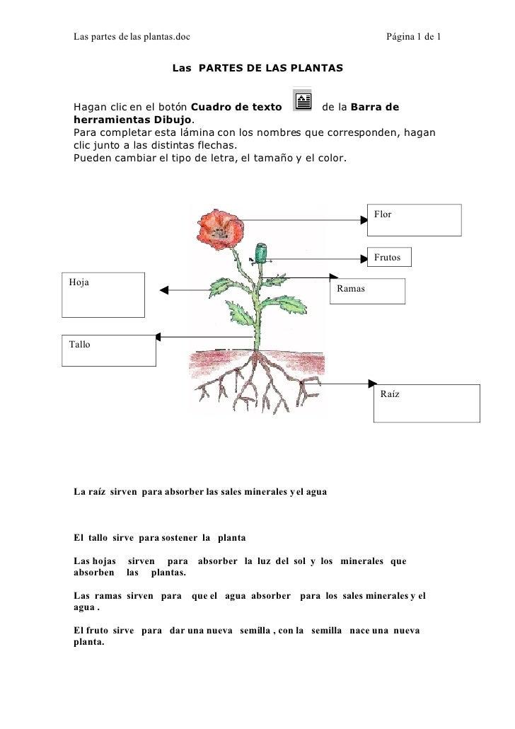 Las partes de las plantas.doc                                          Página 1 de 1                            Las PARTES...