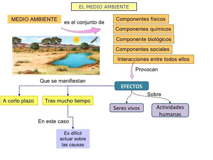 Las personas y el medio ambiente 2009 10 for Que elementos conforman el suelo