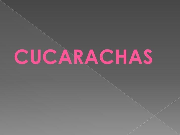 CUCARACHAS<br />