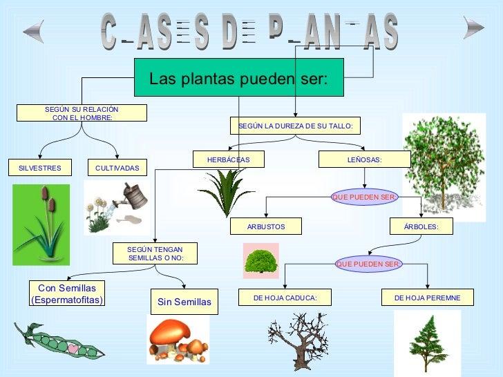 Las plantas for Arboles de jardin de hoja caduca