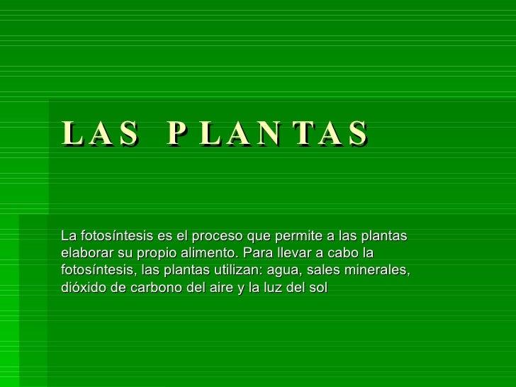 LAS PLANTAS La fotosíntesis es el proceso que permite a las plantas elaborar su propio alimento. Para llevar a cabo la fot...