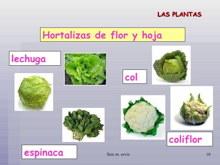 las plantas On plantas hortalizas ejemplos