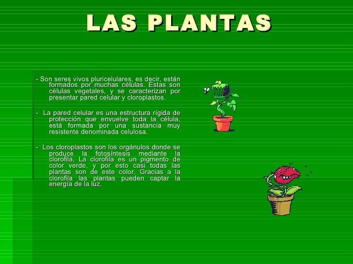 Las Plantas Slide 2