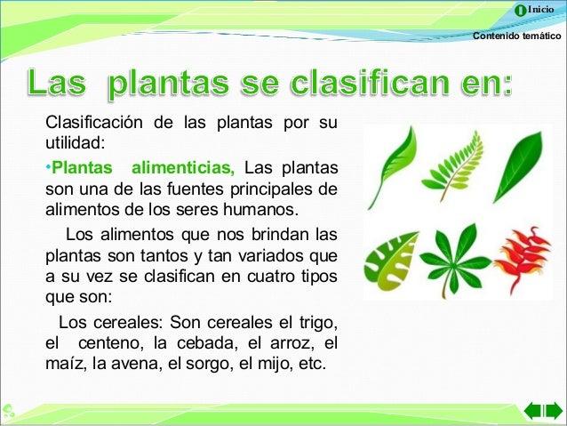 Las plantas for Importancia de las plantas ornamentales