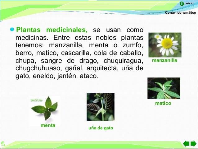122 principales plantas ornamentales floristeria flowers