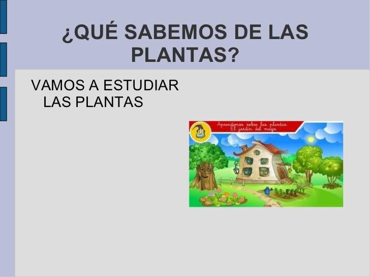 ¿QUÉ SABEMOS DE LAS PLANTAS? VAMOS A ESTUDIAR LAS PLANTAS