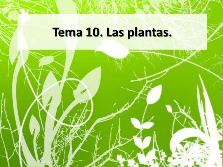 Tema 10. Las plantas.<br />
