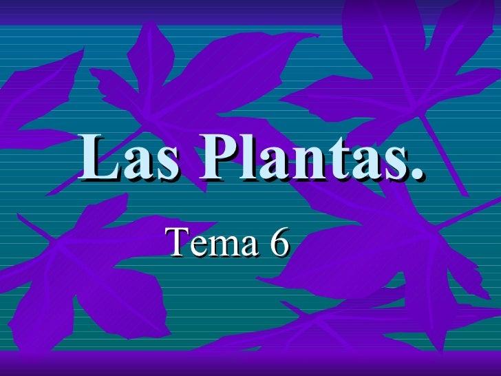 Las Plantas. <ul><li>Tema 6 </li></ul>