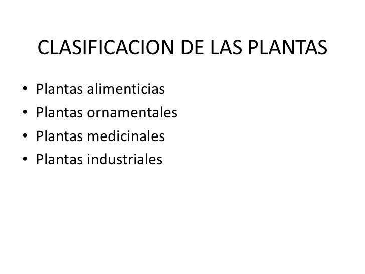 Las plantas yolanda reinoso for Clases de plantas ornamentales