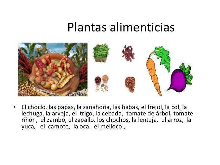 Las plantas yolanda reinoso for Cuales son las plantas ornamentales