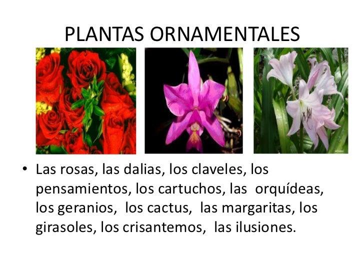 Las plantas yolanda reinoso for Funcion de las plantas ornamentales