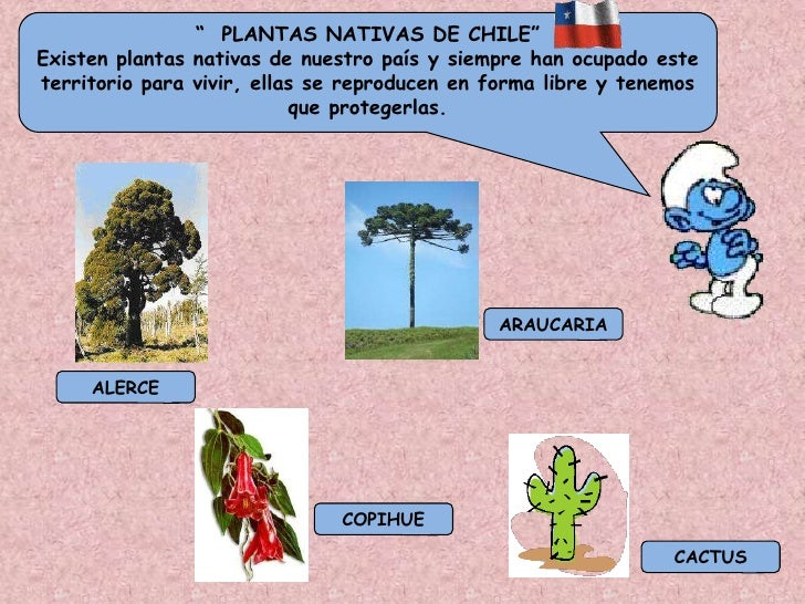 Las plantas for Planta de chile